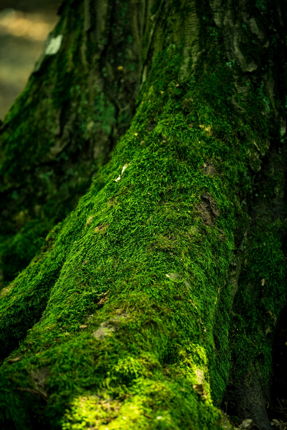 photo of tree covered with moss