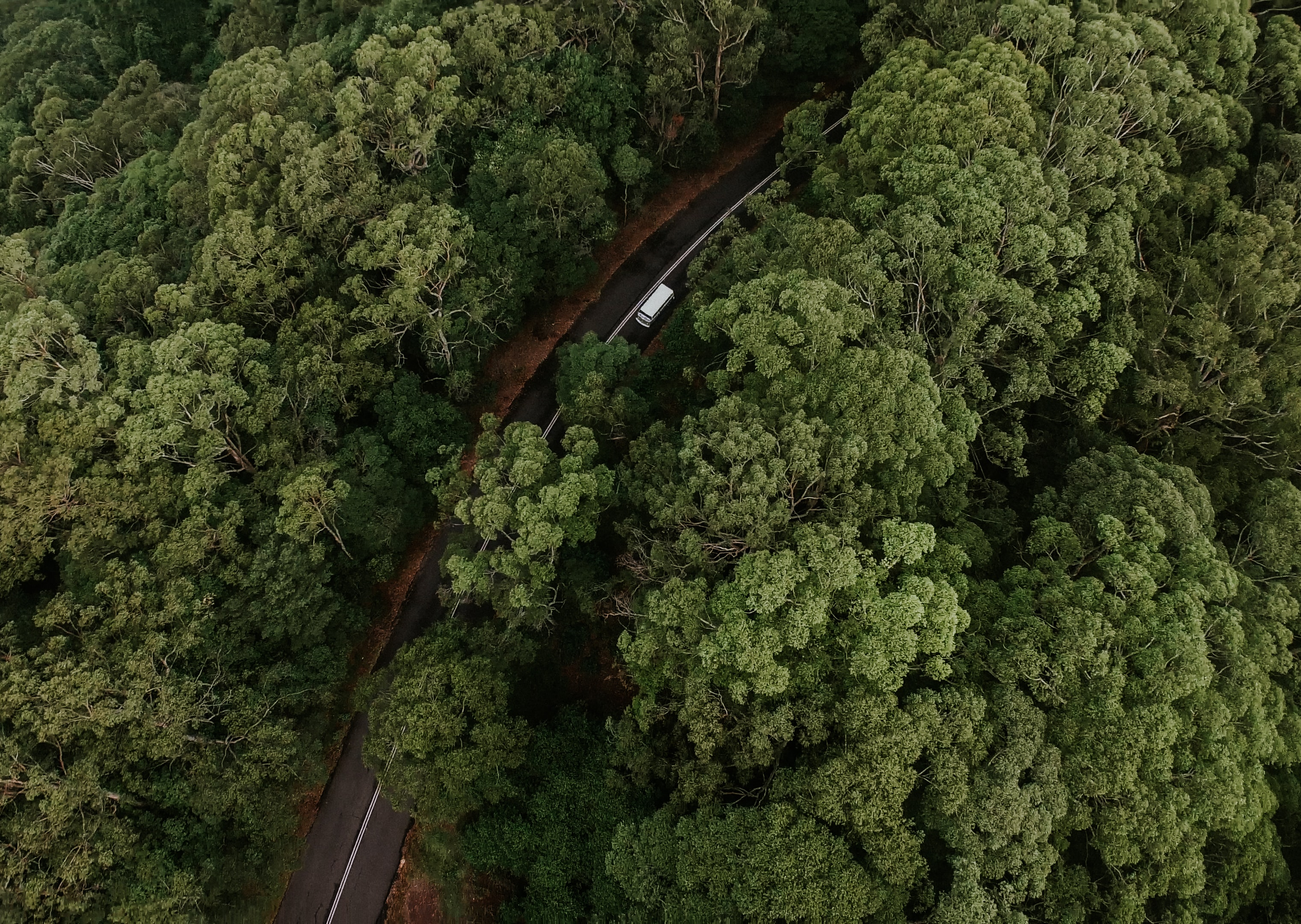 aerial photography of road in between trees