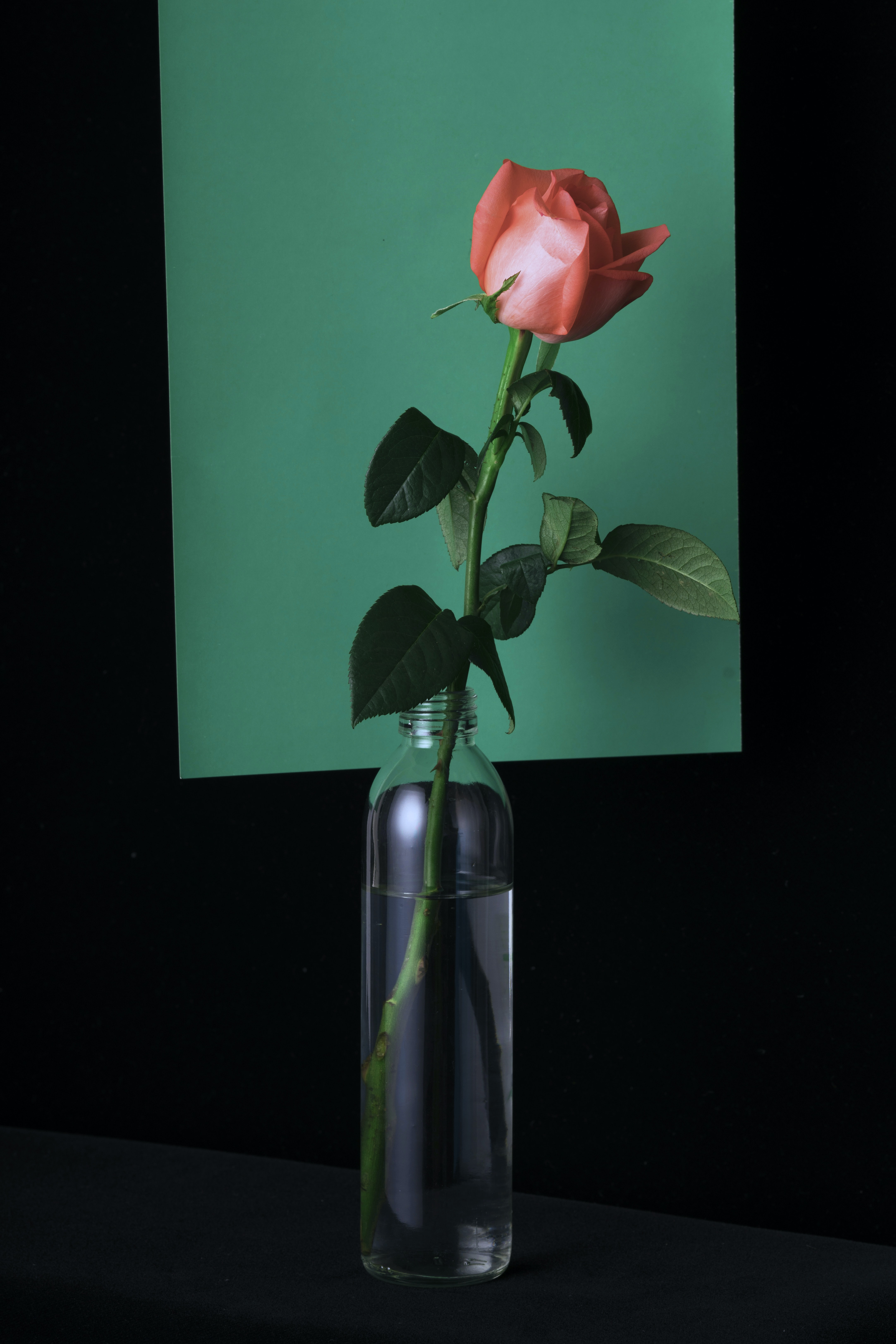 pink rose in clear glass vase
