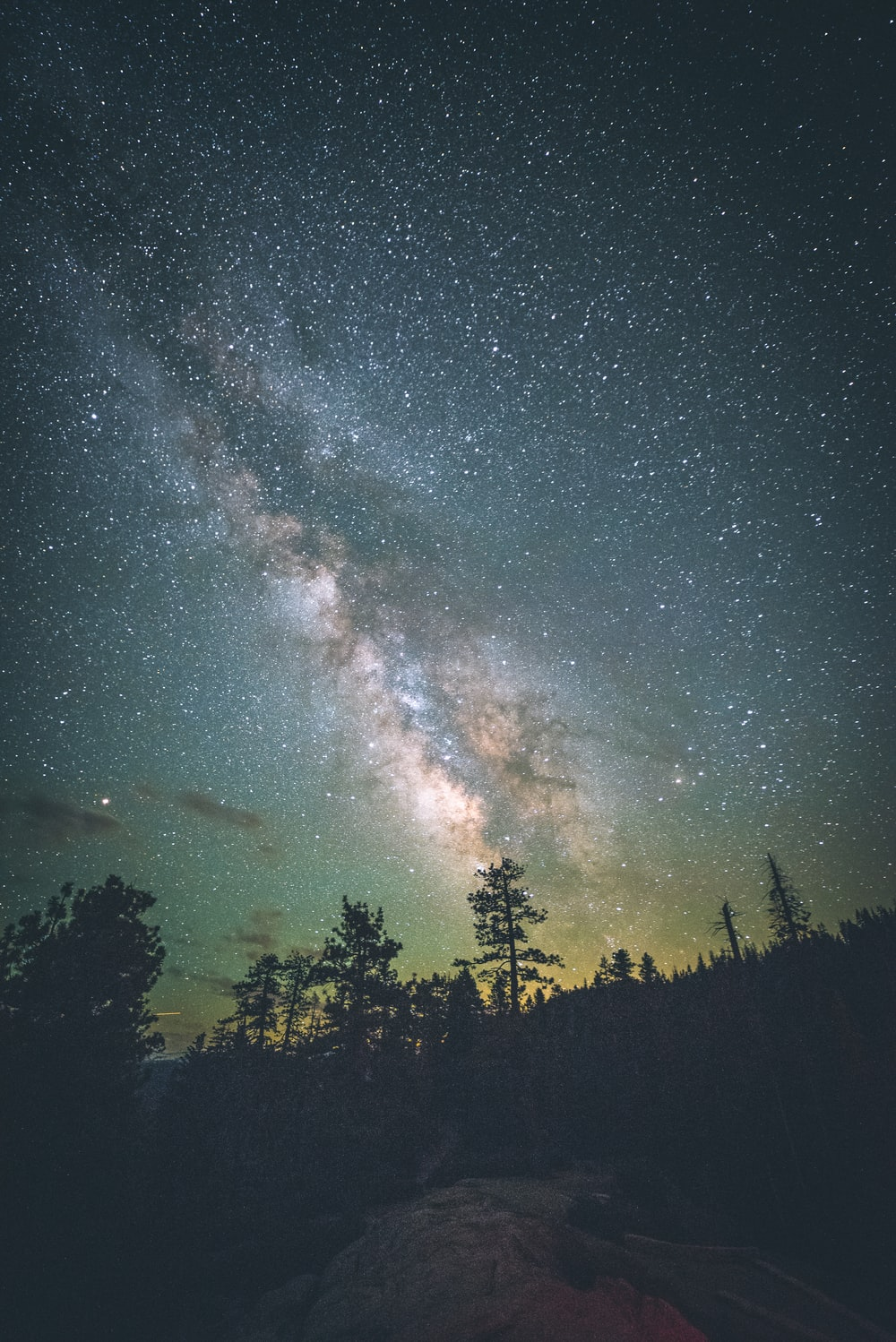 silhouettes of trees under starry sky