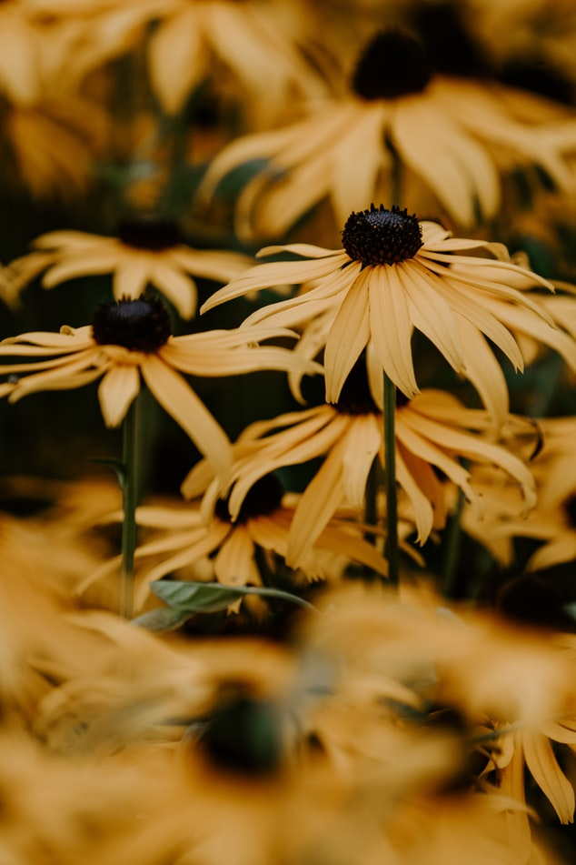 Stunning Perennial Flower Garden With 10 Easy To Grow Varieties