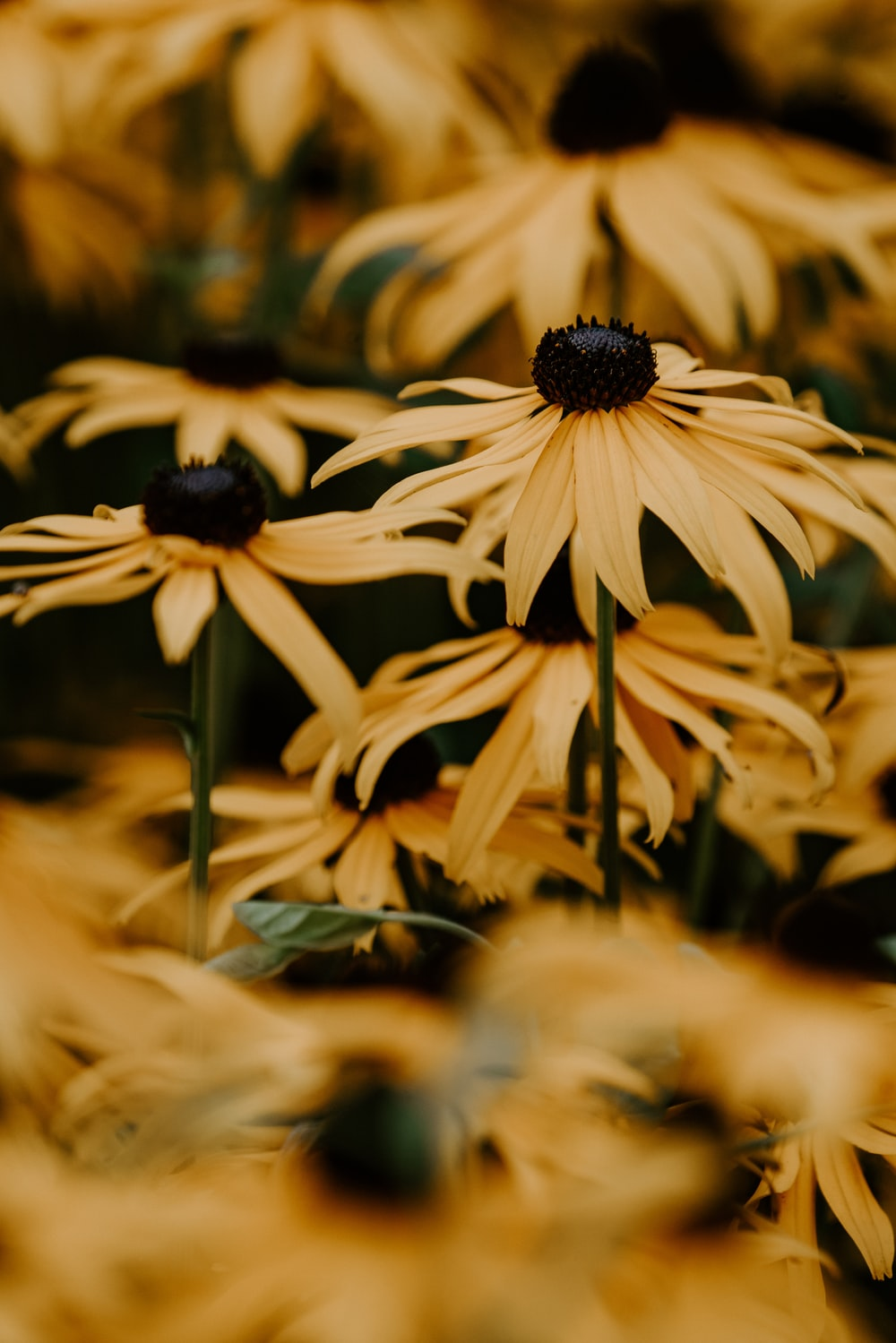 Yellow Flower Pictures Hq Download Free Images Stock Photos On