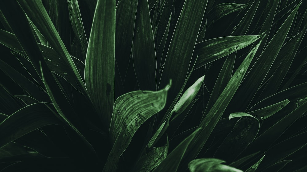 close photo of linear leafed plant