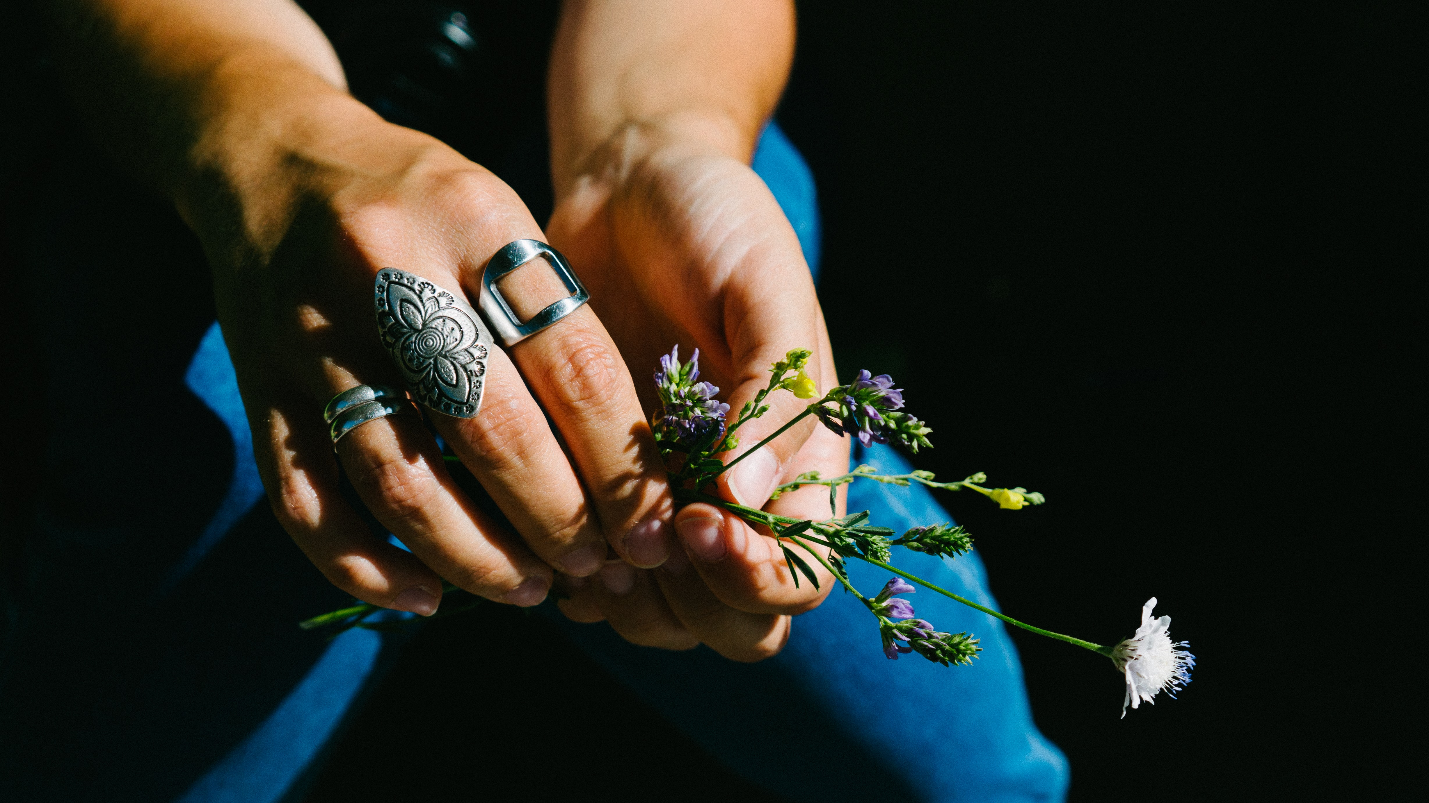 person holding white flowering plant