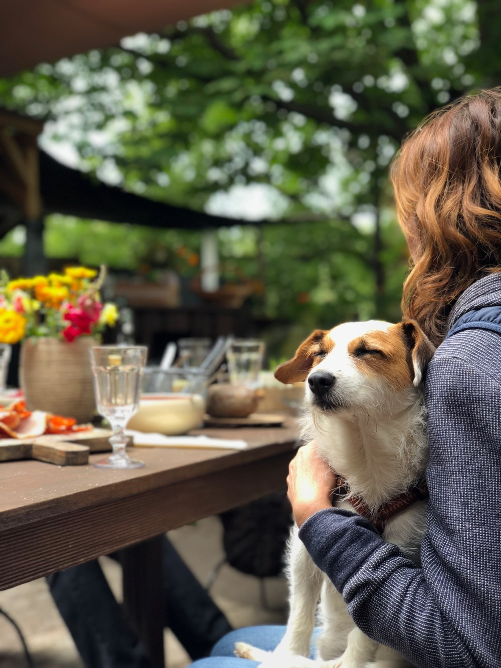 dog on woman's lap in front of dining table