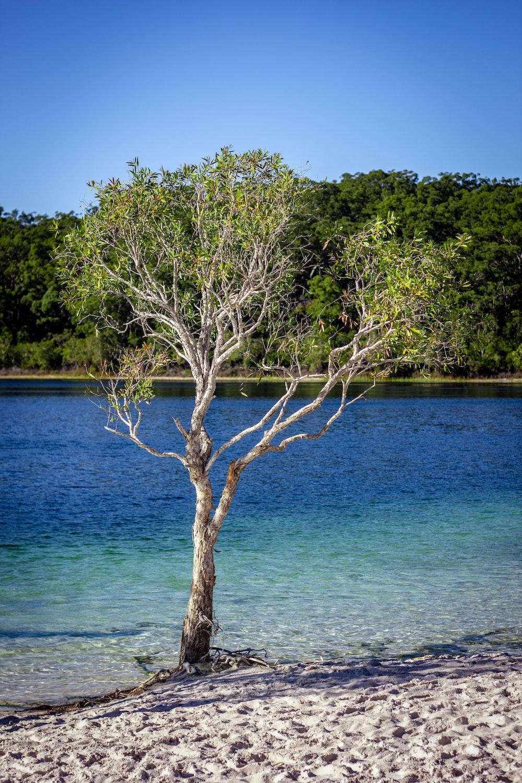 green leafed tree near seashore at daytime