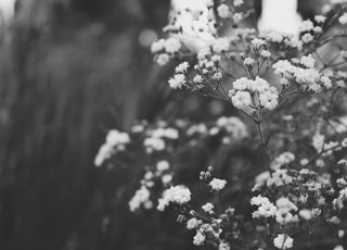 petaled flowers in grayscale photo