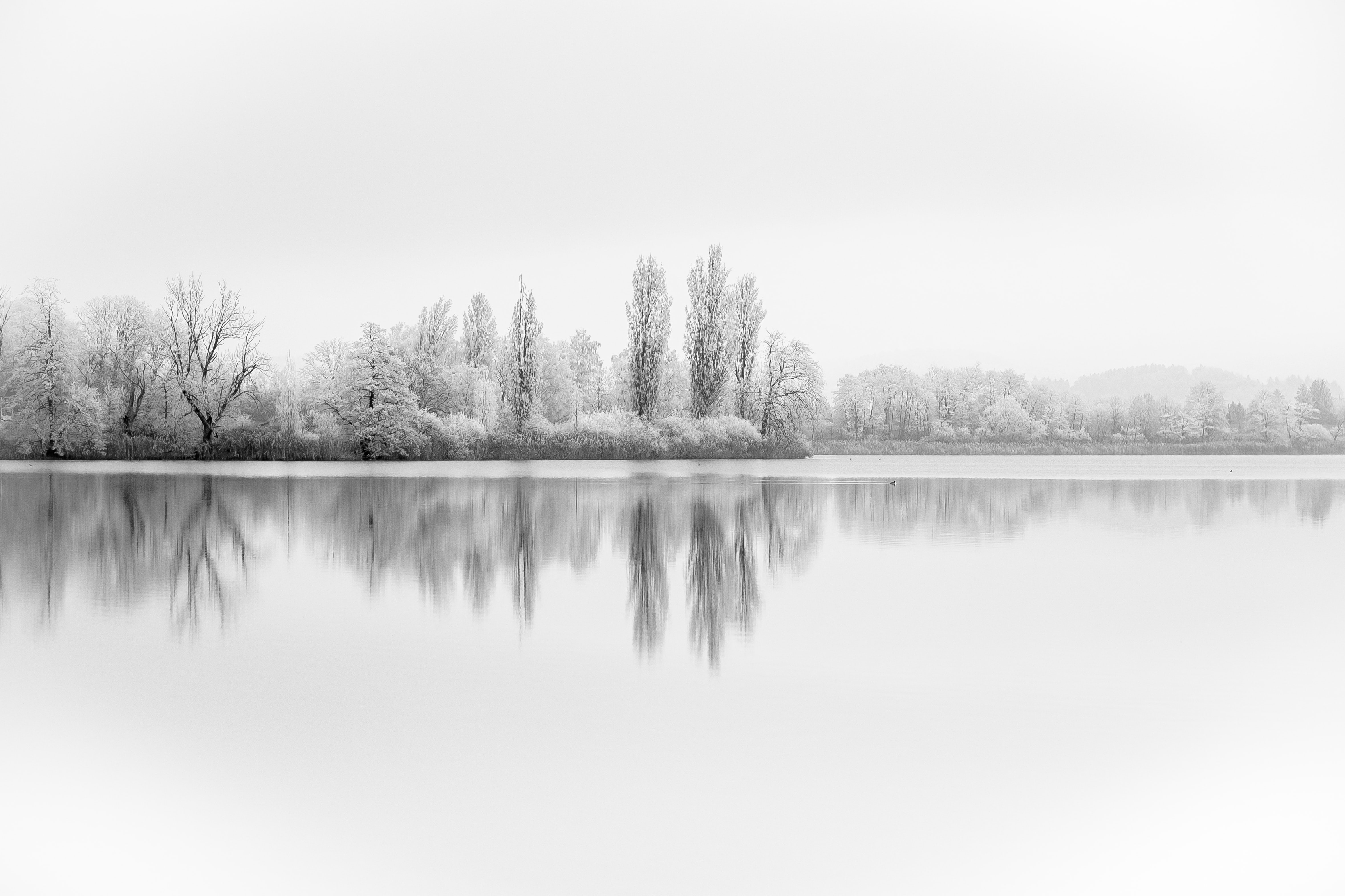 forest covered with snow reflected on body of water grayscale photo