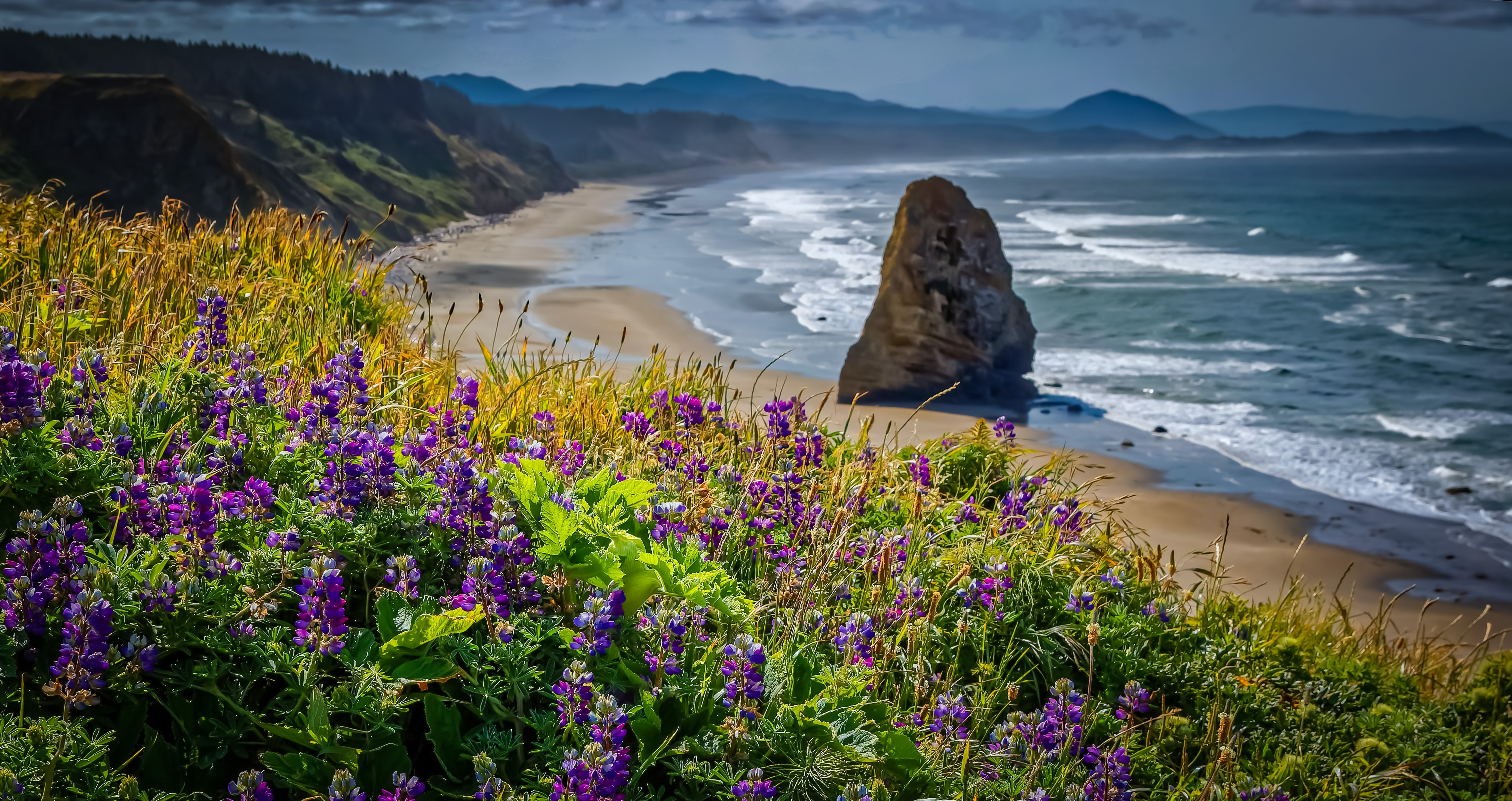 purple petaled flower field with ocean view at daytime