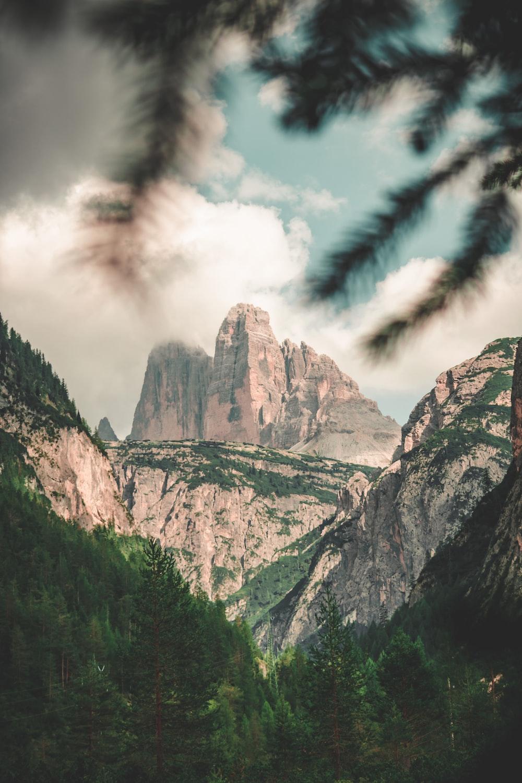 forest near mountain