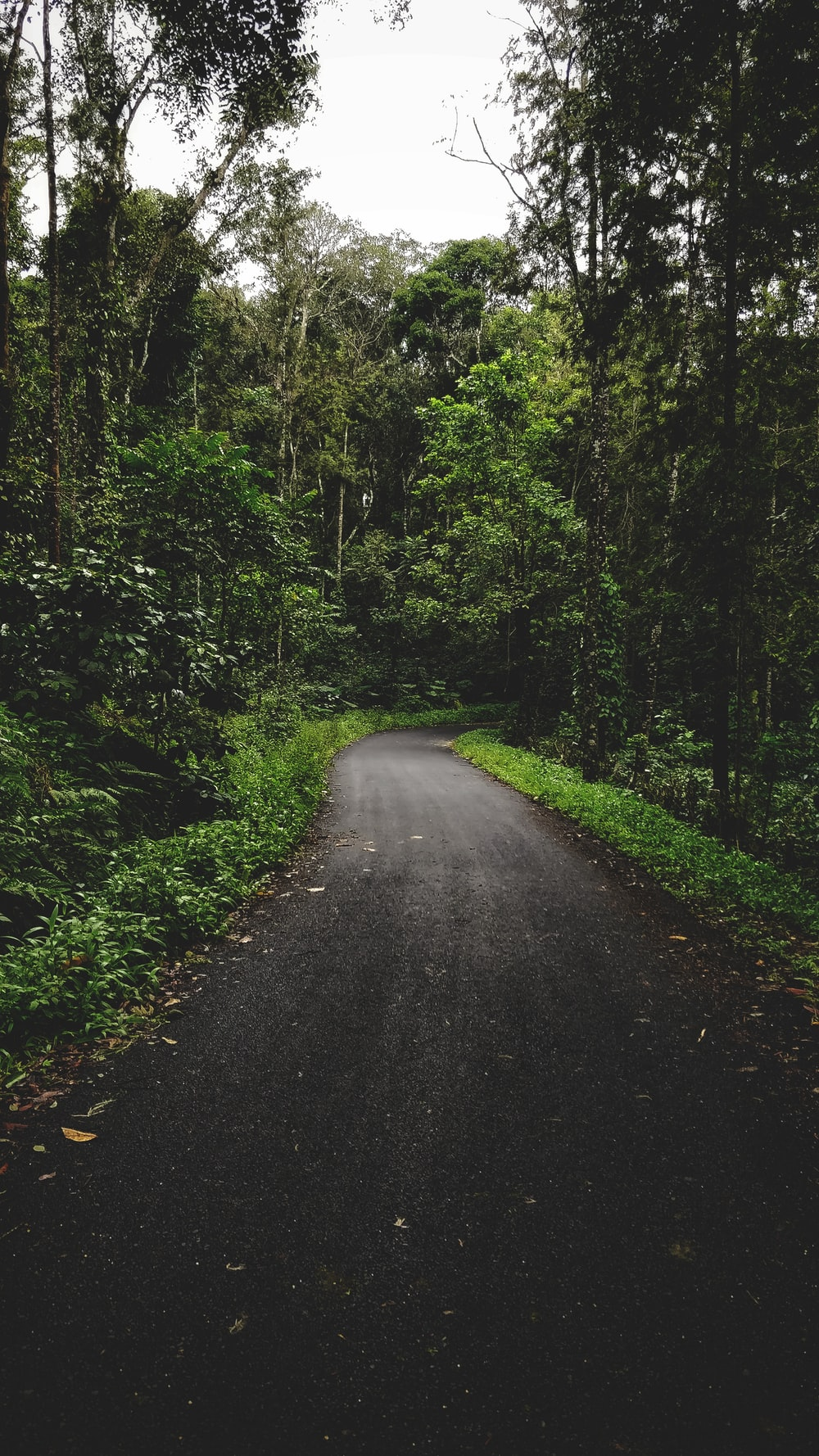 gray road surrounded by green trees