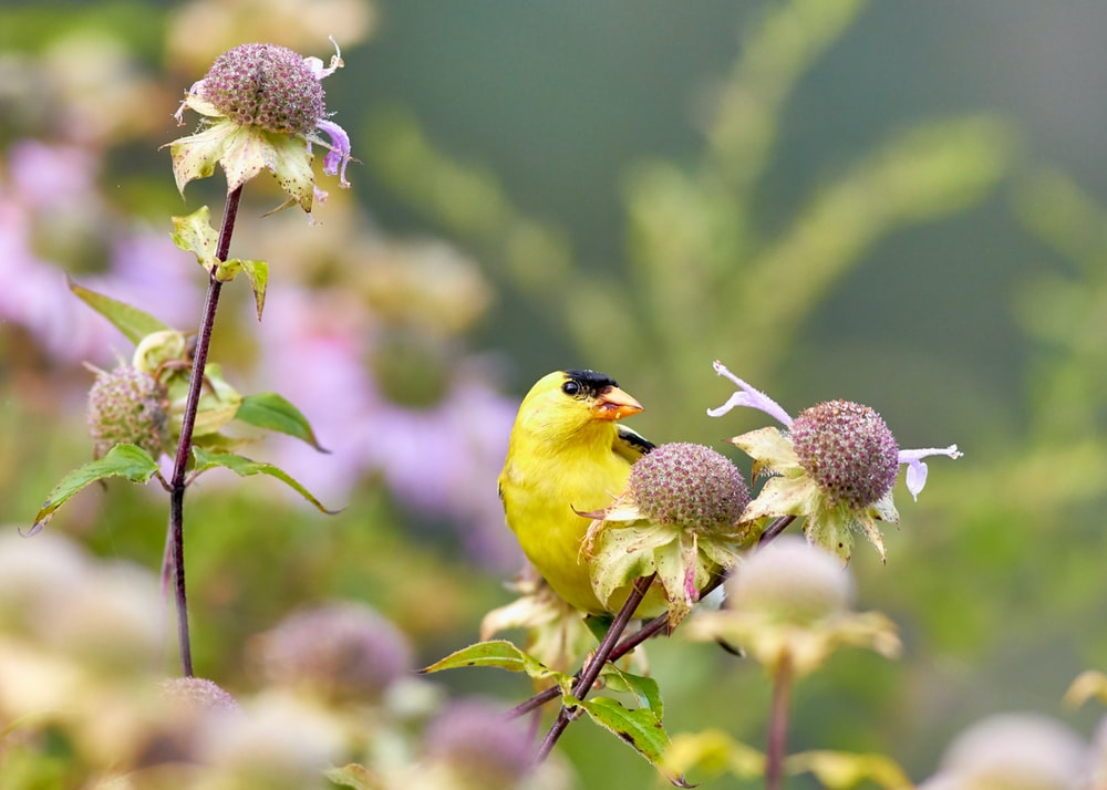 yellow and orange beck bird perching on flower
