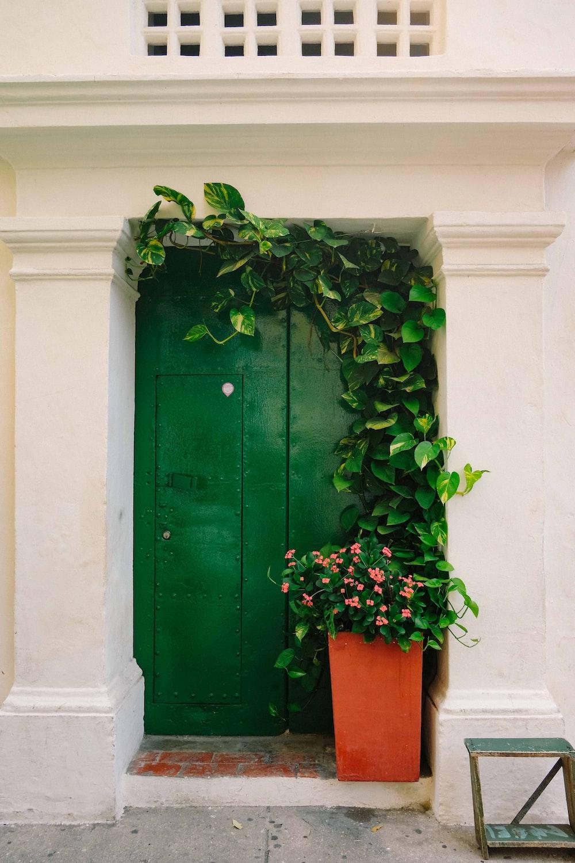 green door with green ivy plant