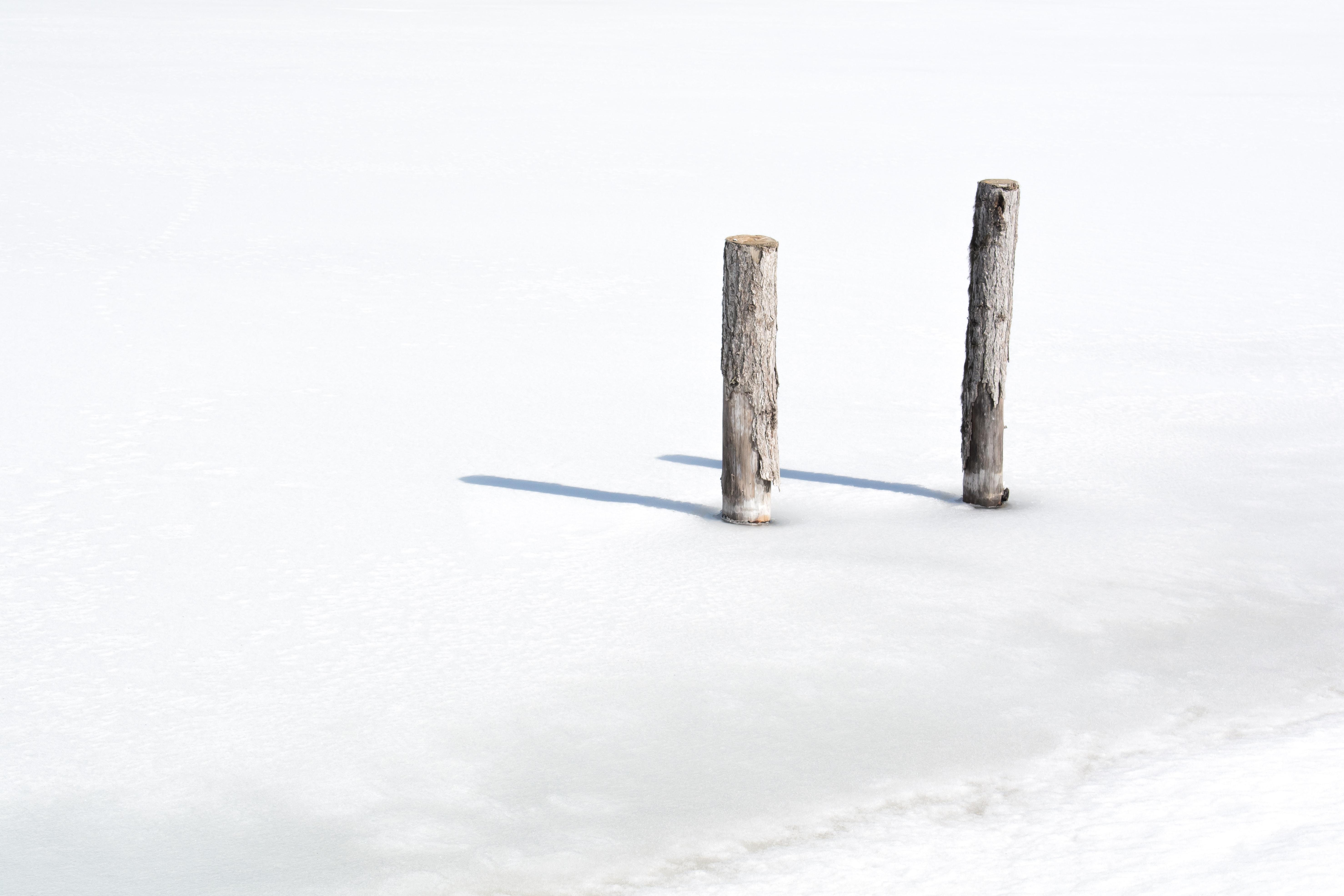 two tree logs