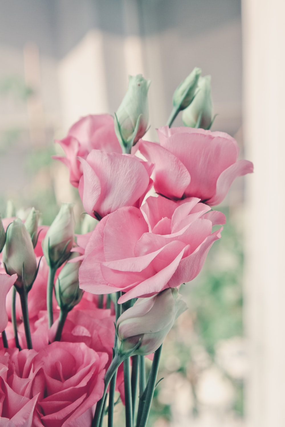 100 Rose Flower Pictures Download Free Images On Unsplash