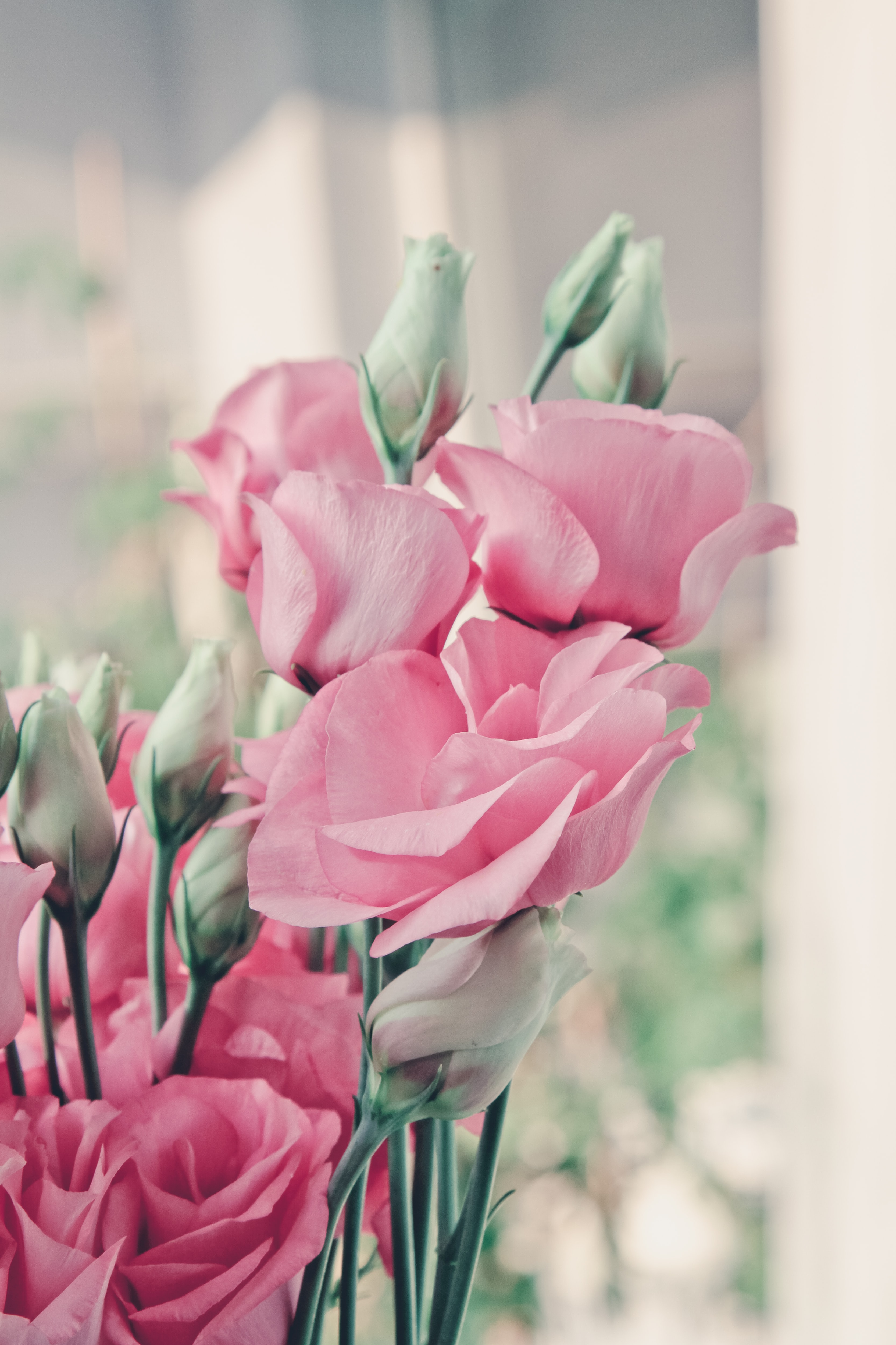 selective focus photo of pink rose
