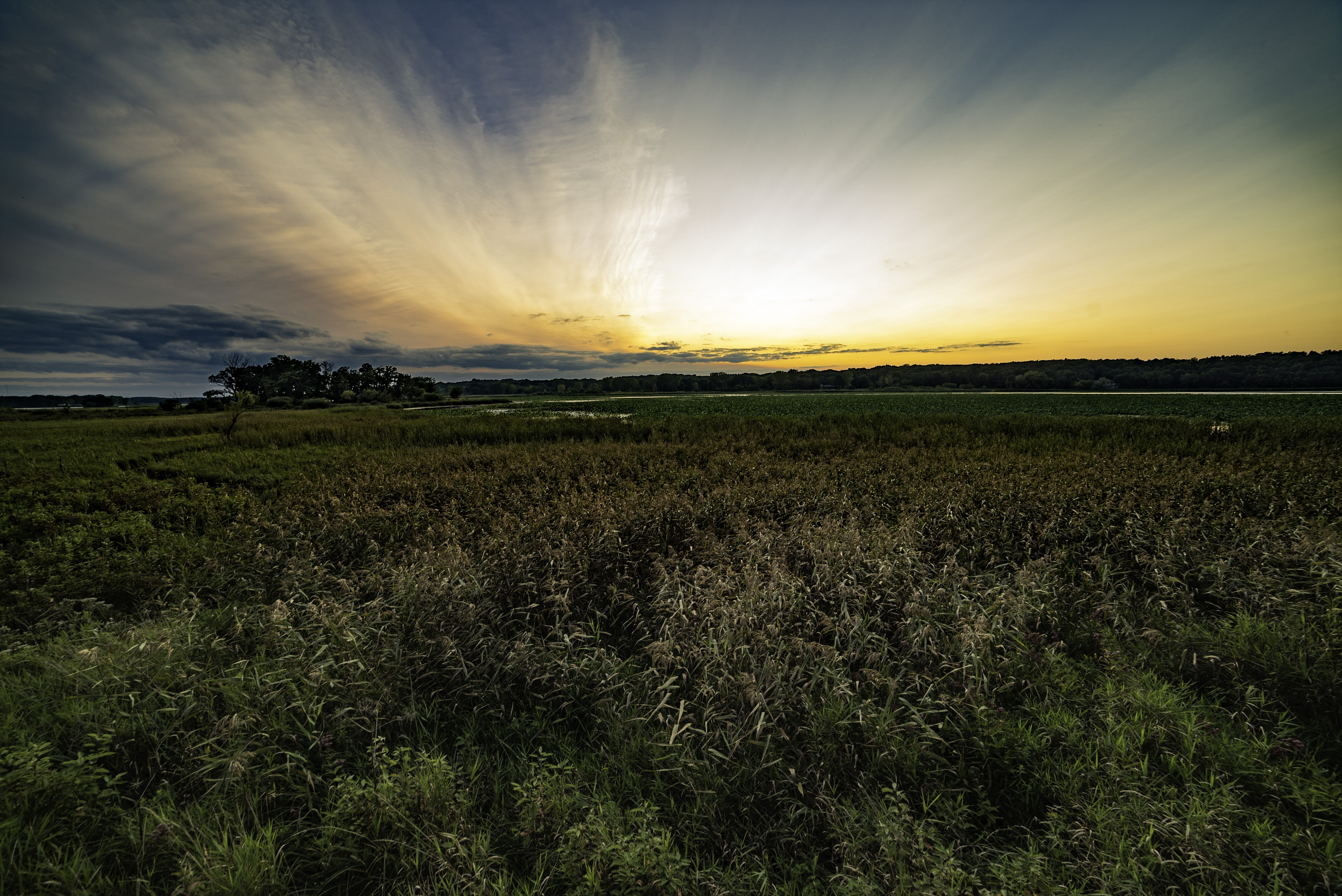 landscape photography of green grass field at golden hour