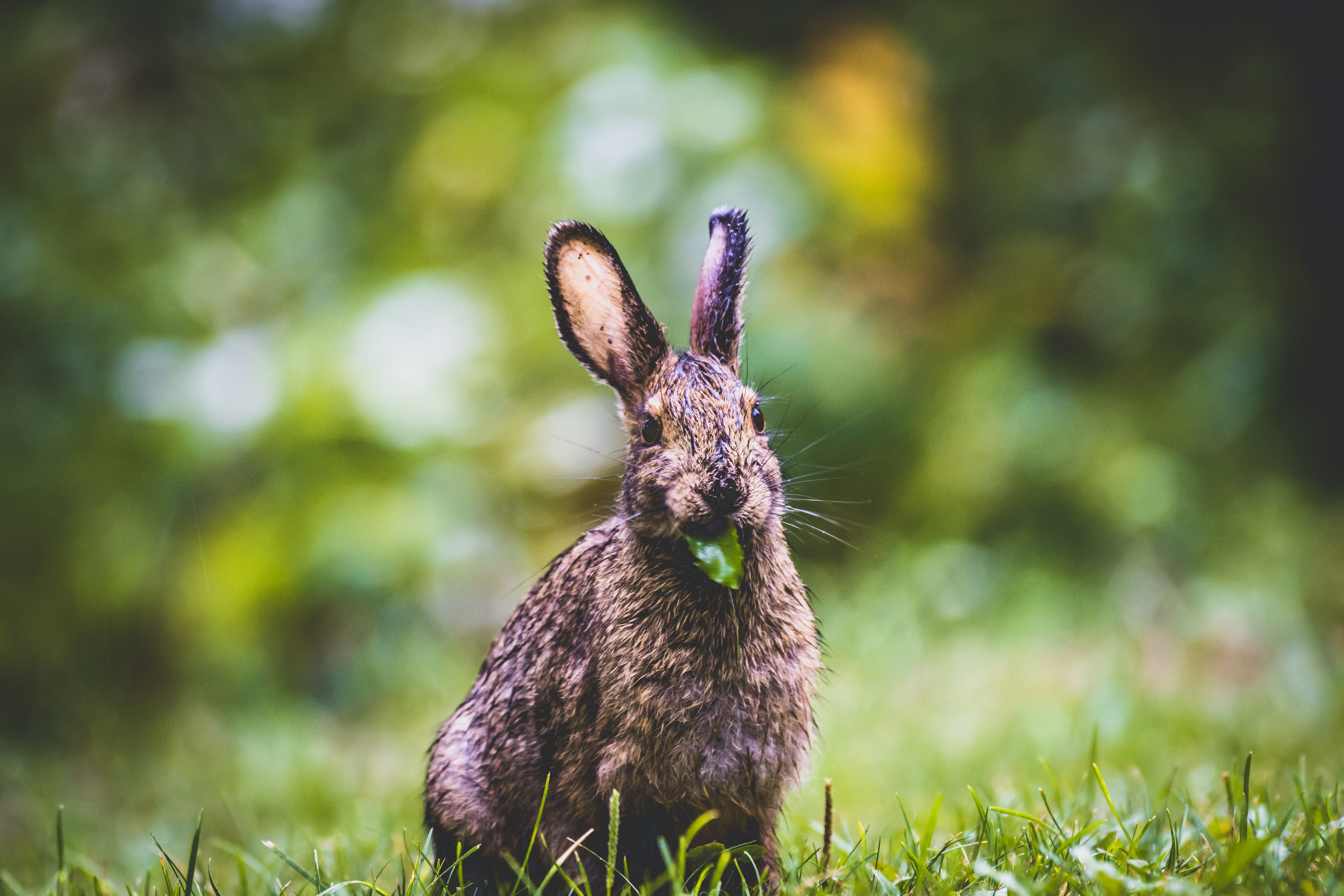 brown rabbit photography