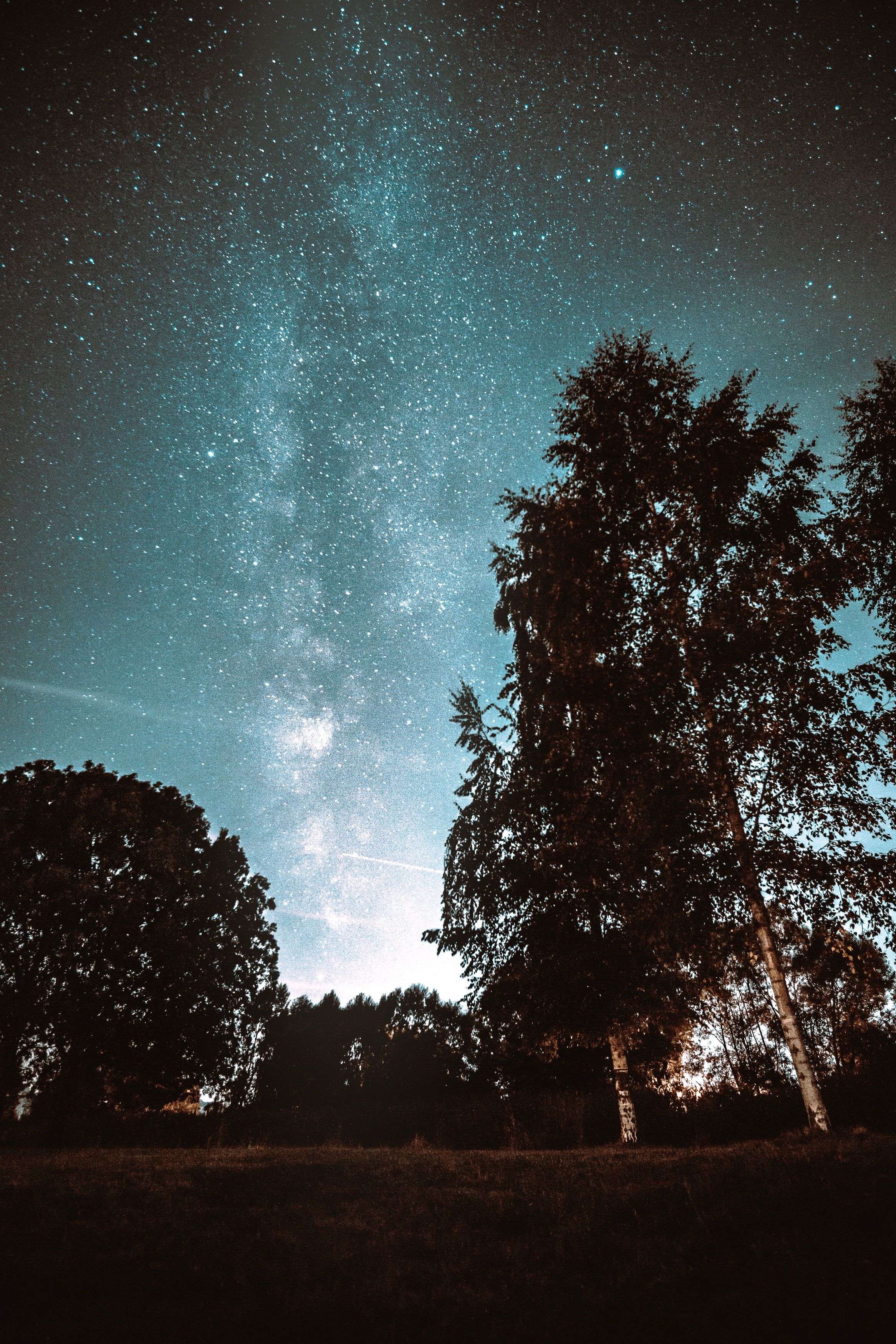 silhouette of trees and milky way
