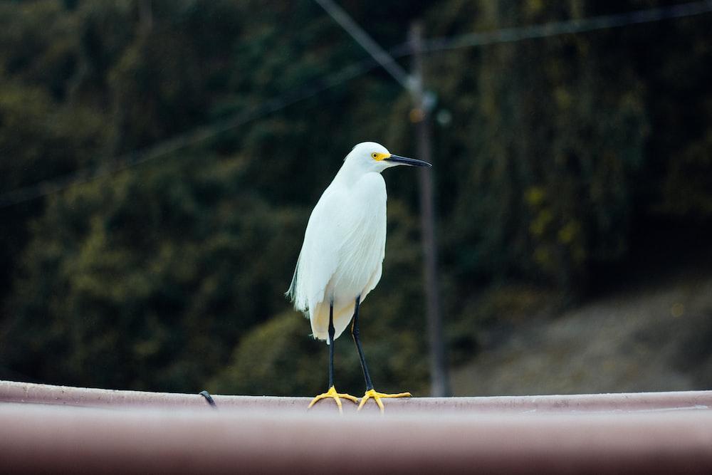 white crane bird