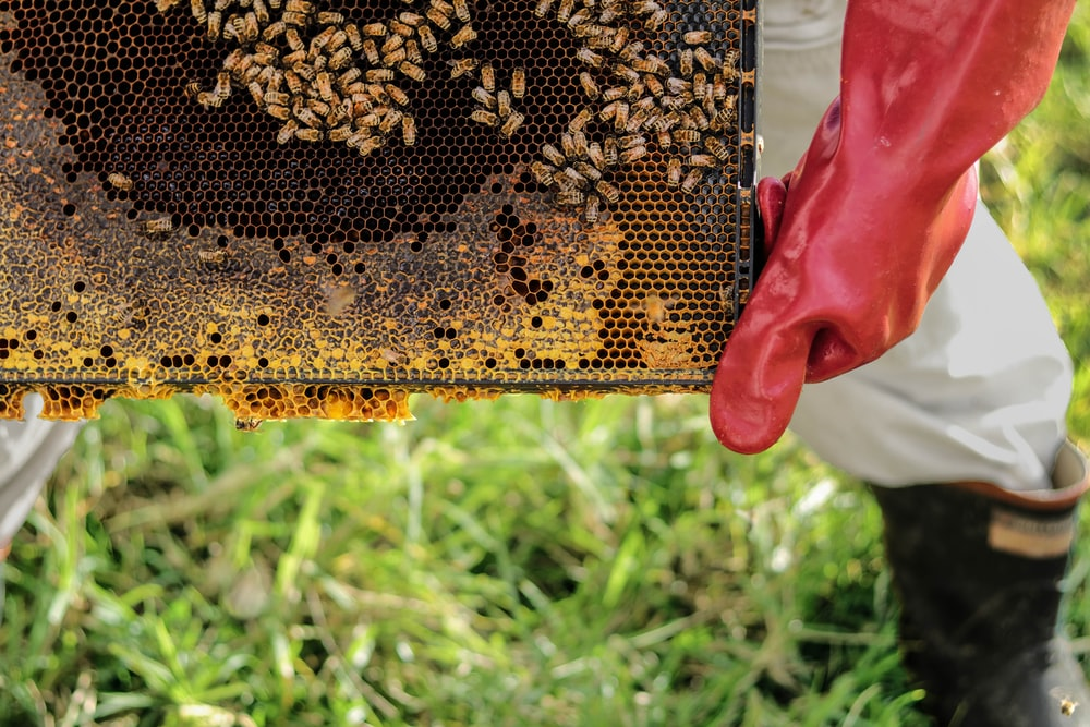 person holding honey hive frame