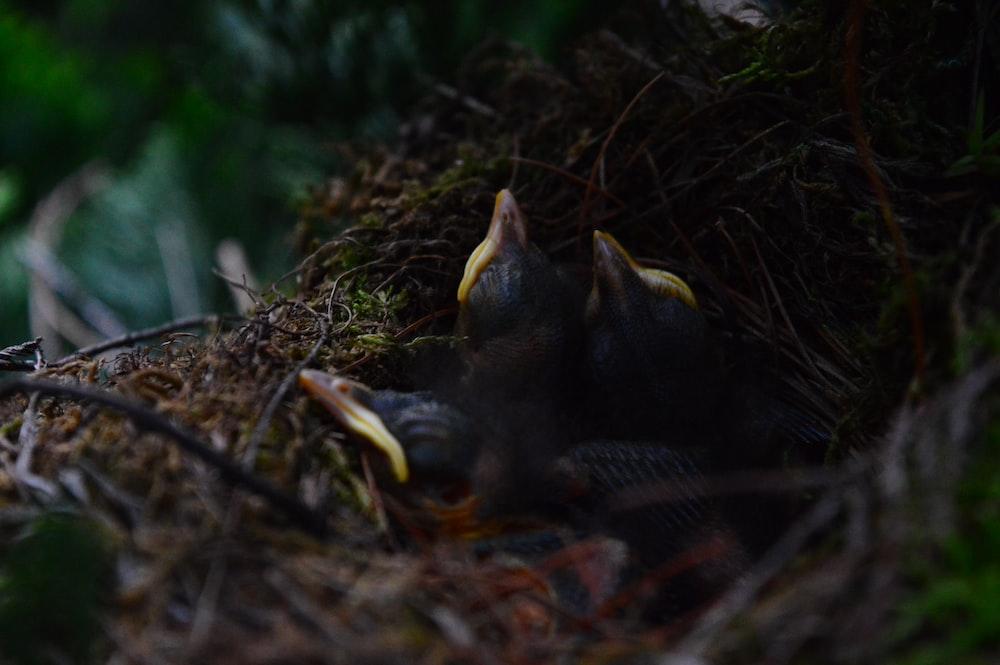 birds on nest
