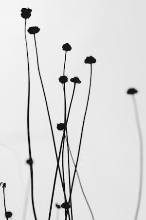 4806. Virágok