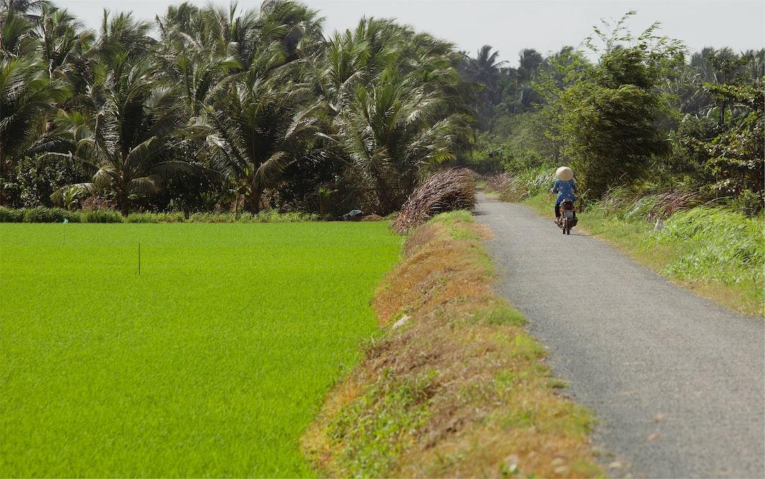 Travelling the Rice Paddies