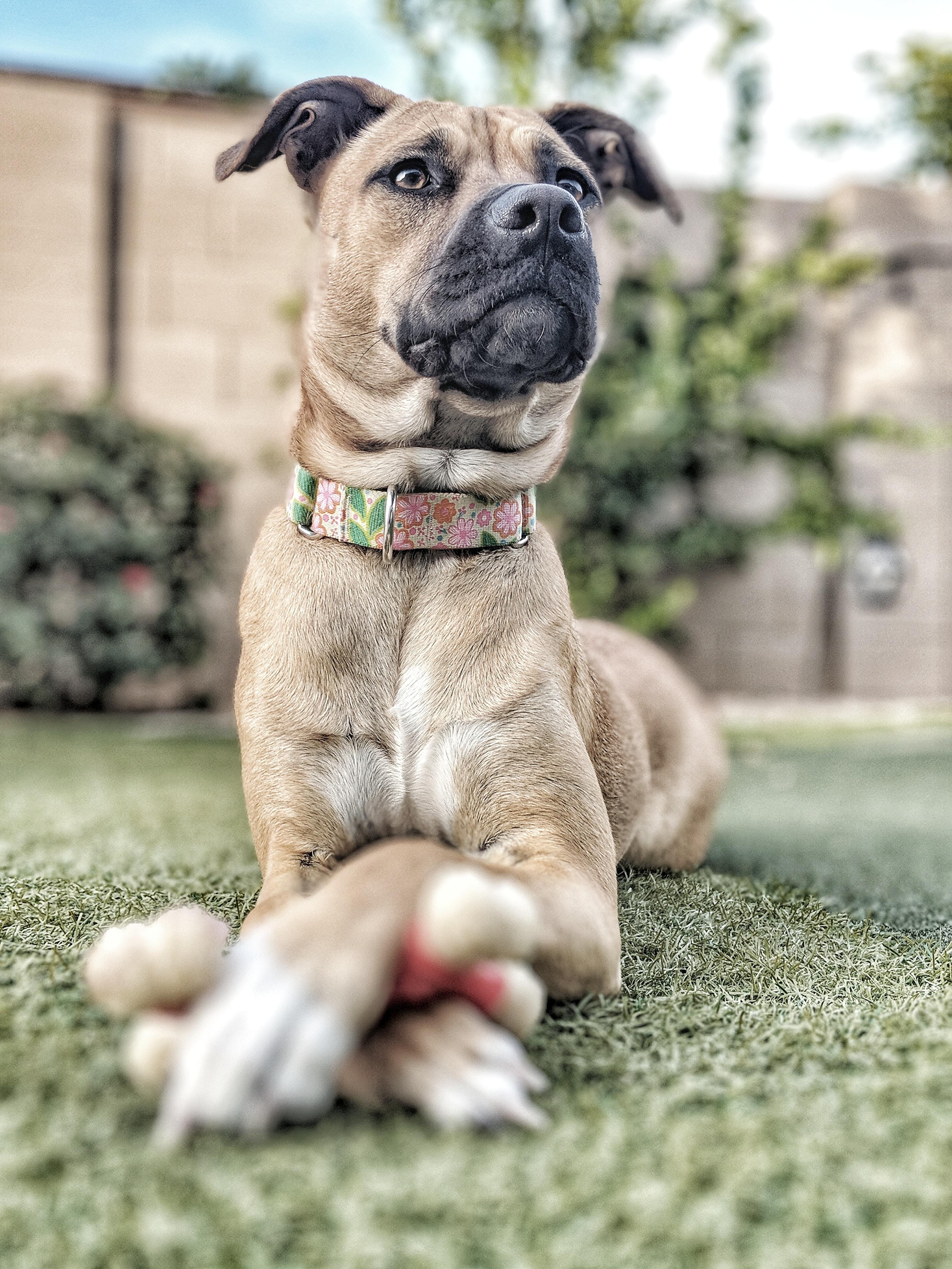 brown dog lying on gray concrete floor