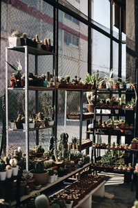 assorted cactus with pots on rack beside wall
