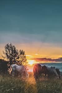 Inktober #2: Forever Summer horses stories