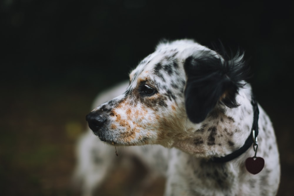 shallow focus photography of white and black dog
