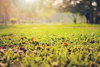 selective focus photography of grass field ground zoom background