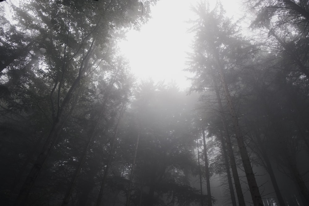 grayscale photography of sun striking through tall trees