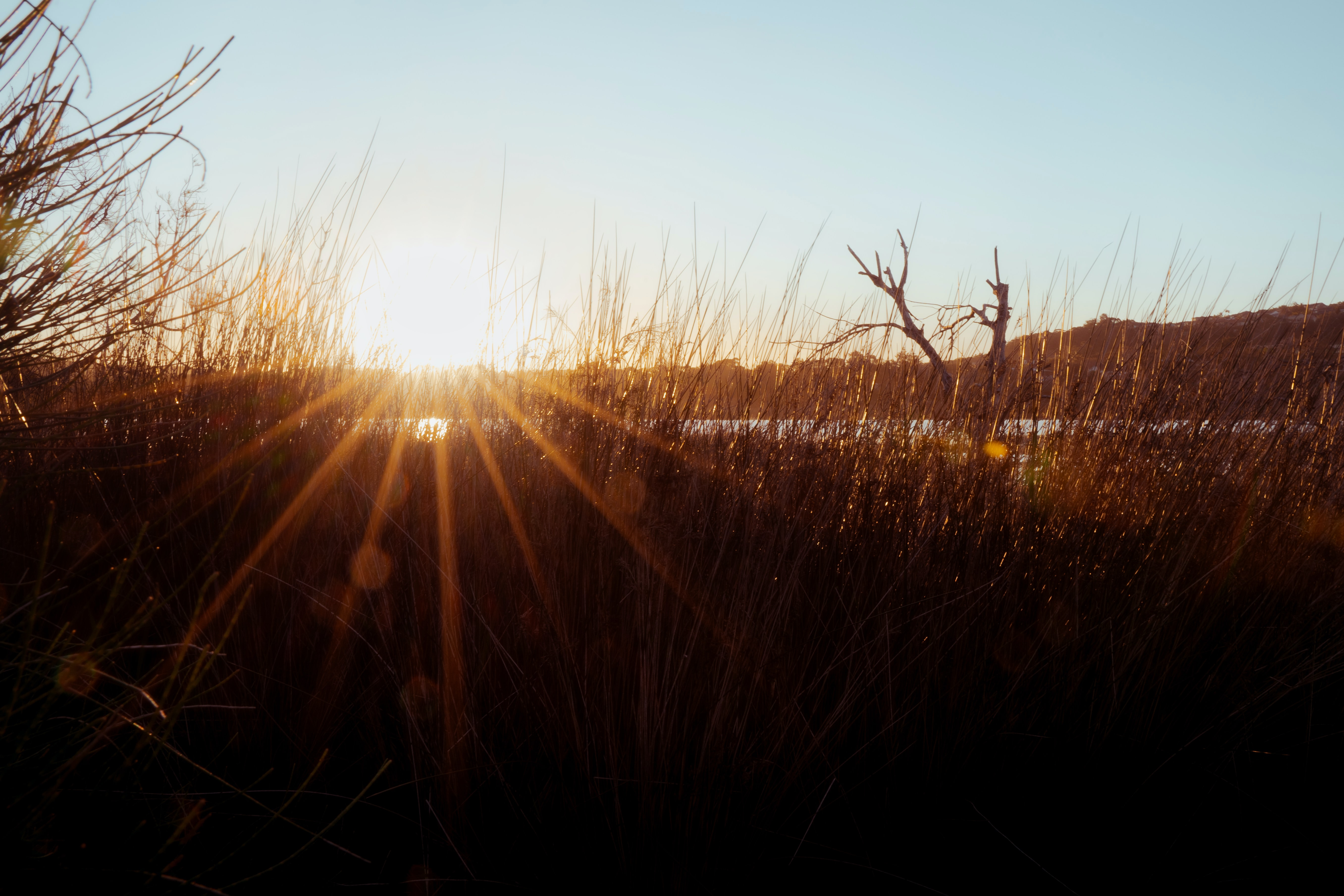 brown grass field during sunrise