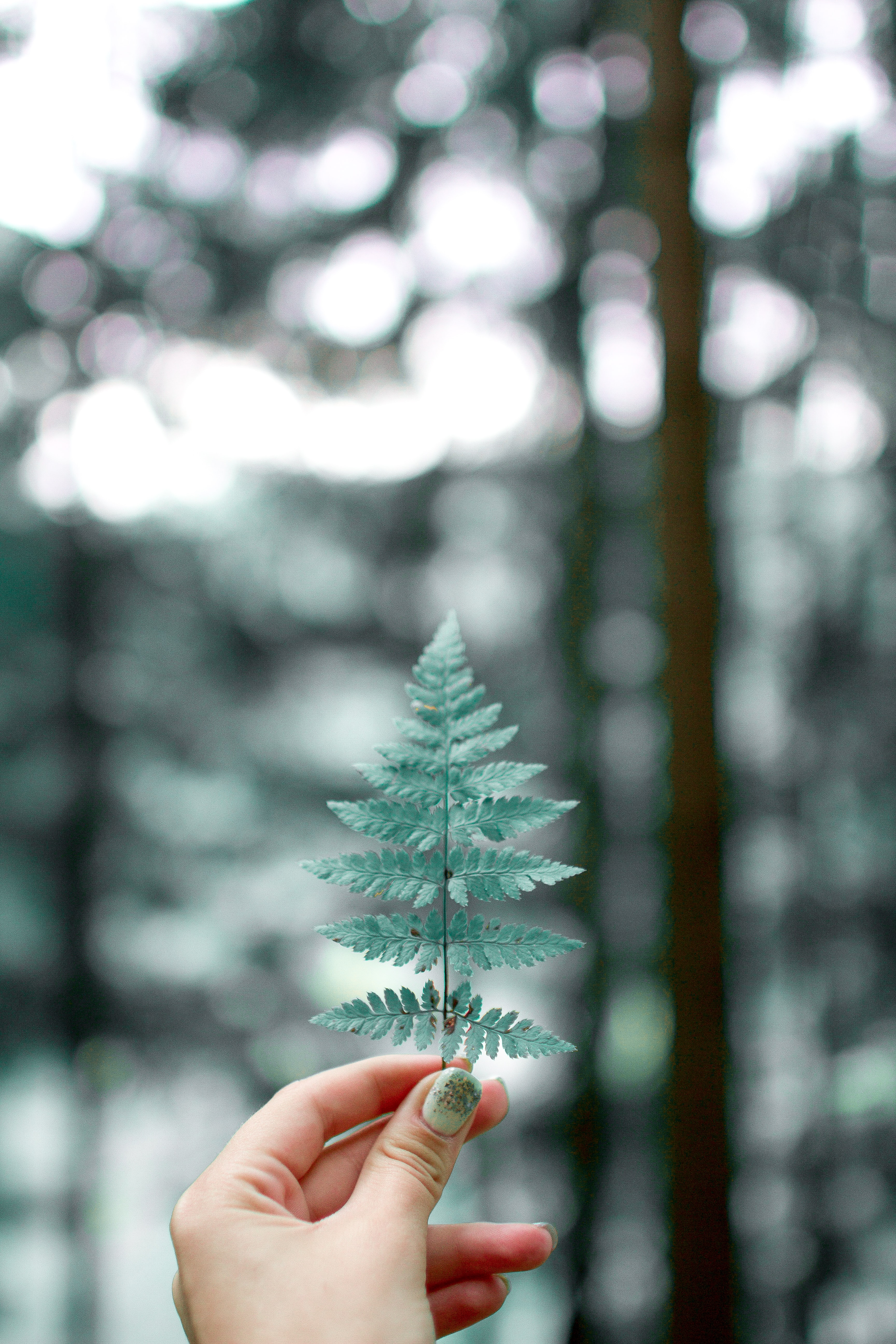 selective focused person holding fern leaf