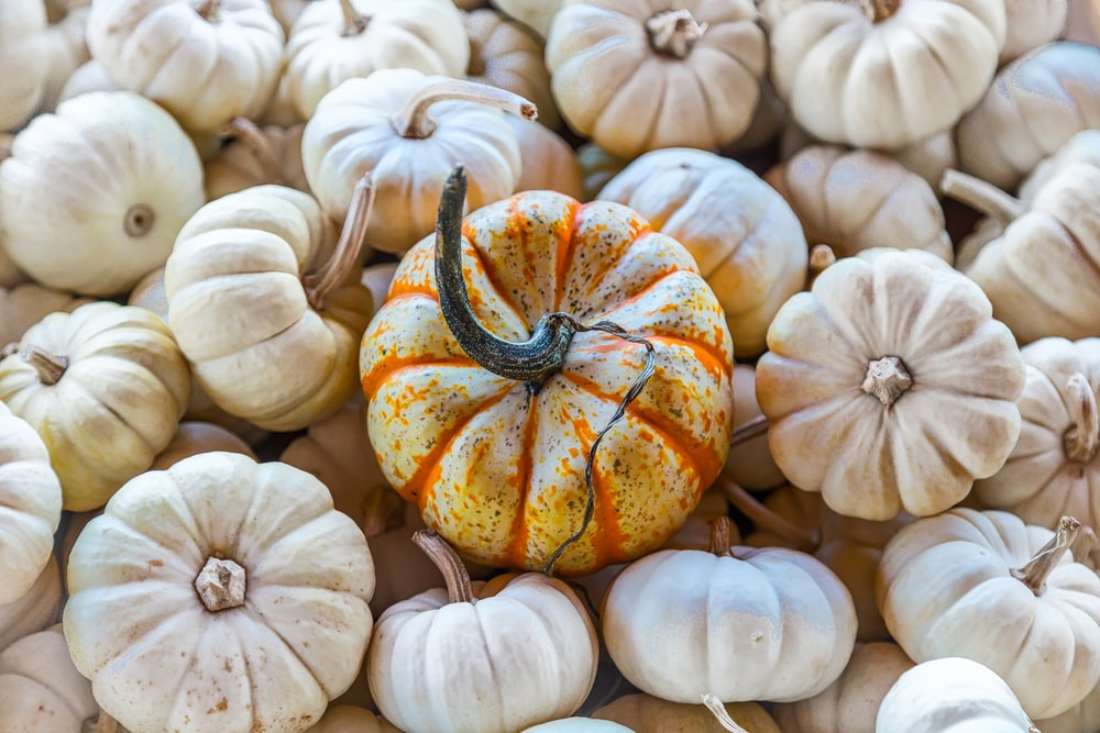 bunch of squashes