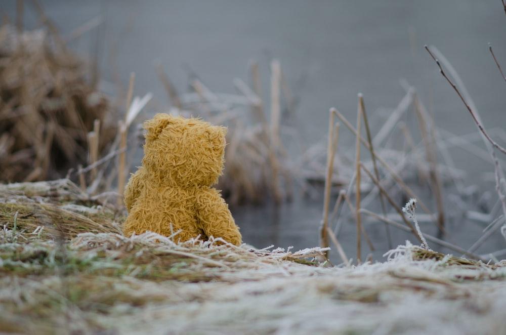 bear plush toy on grass