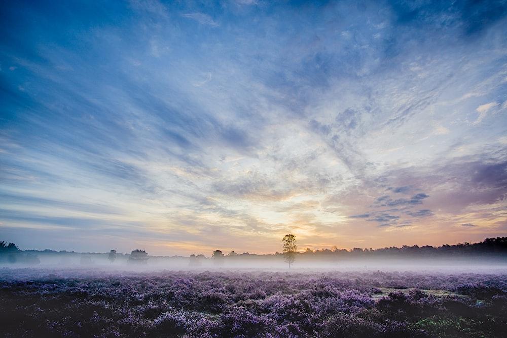 landscape photography of purple petaled flowers