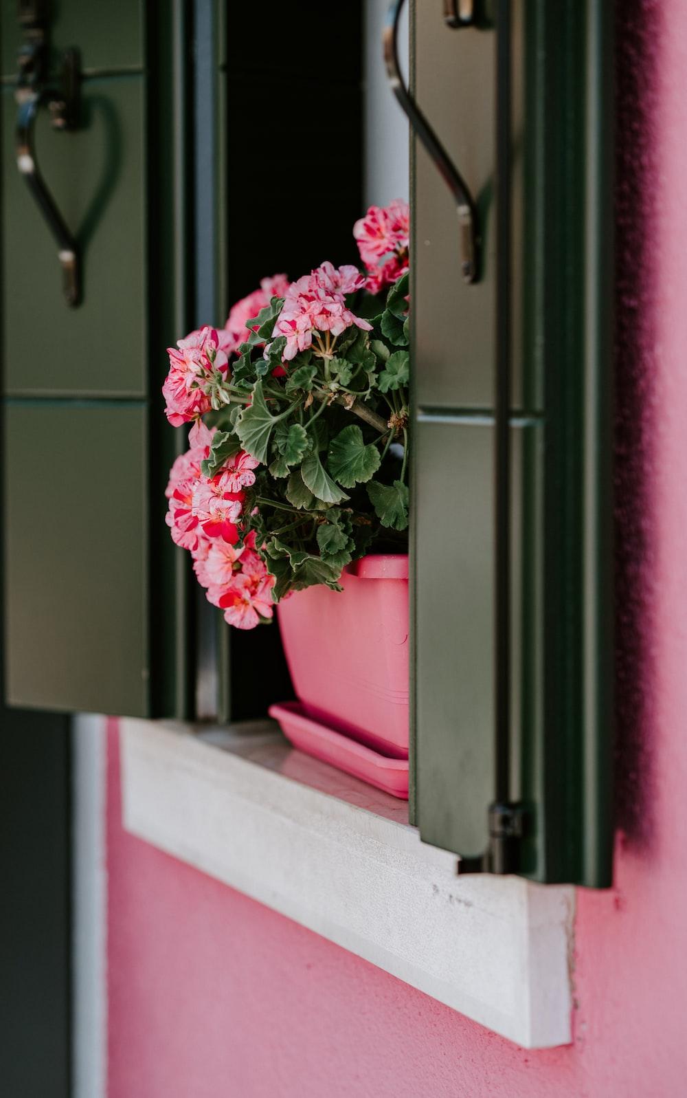pink petal flower on window