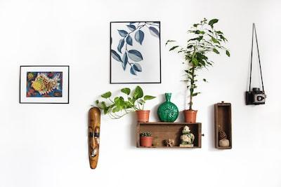 白い壁に飾られた額縁や木製の棚・植物