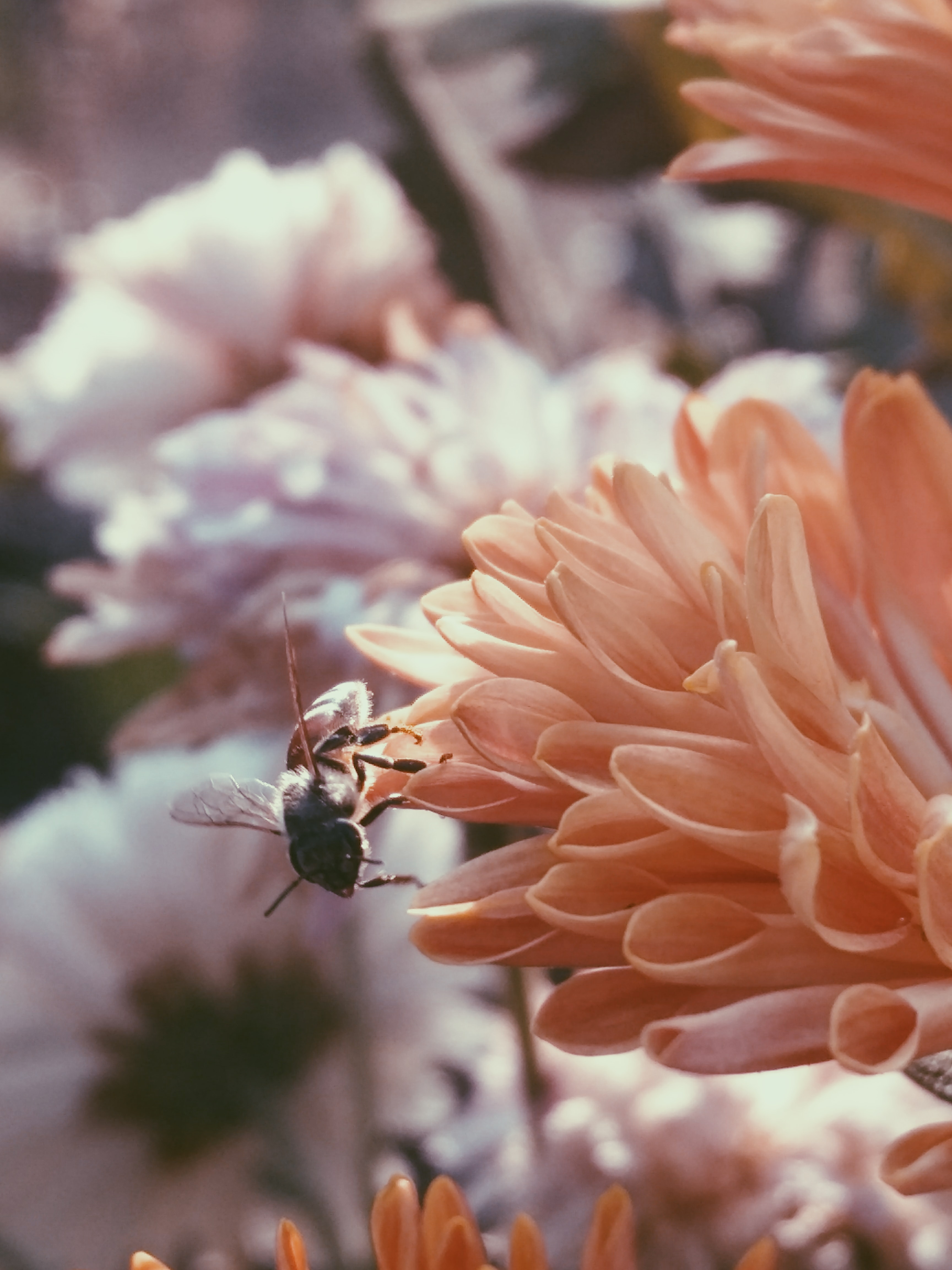 macro photography of black and brown bee