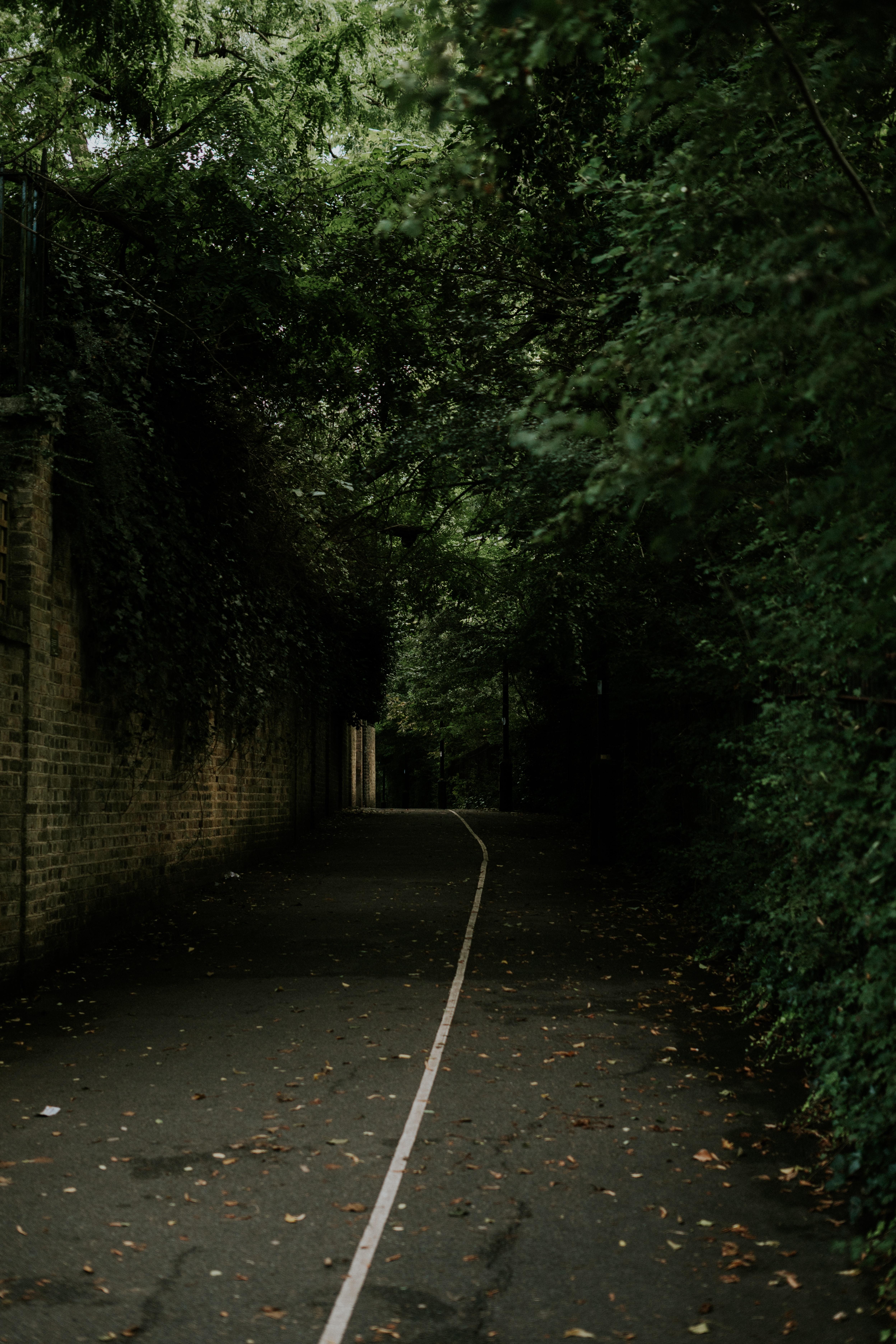 pavement between brick wall and trees