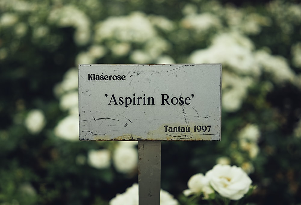 selective focus photography of Klaserose Aspiring Rose Tantau 1997 signage