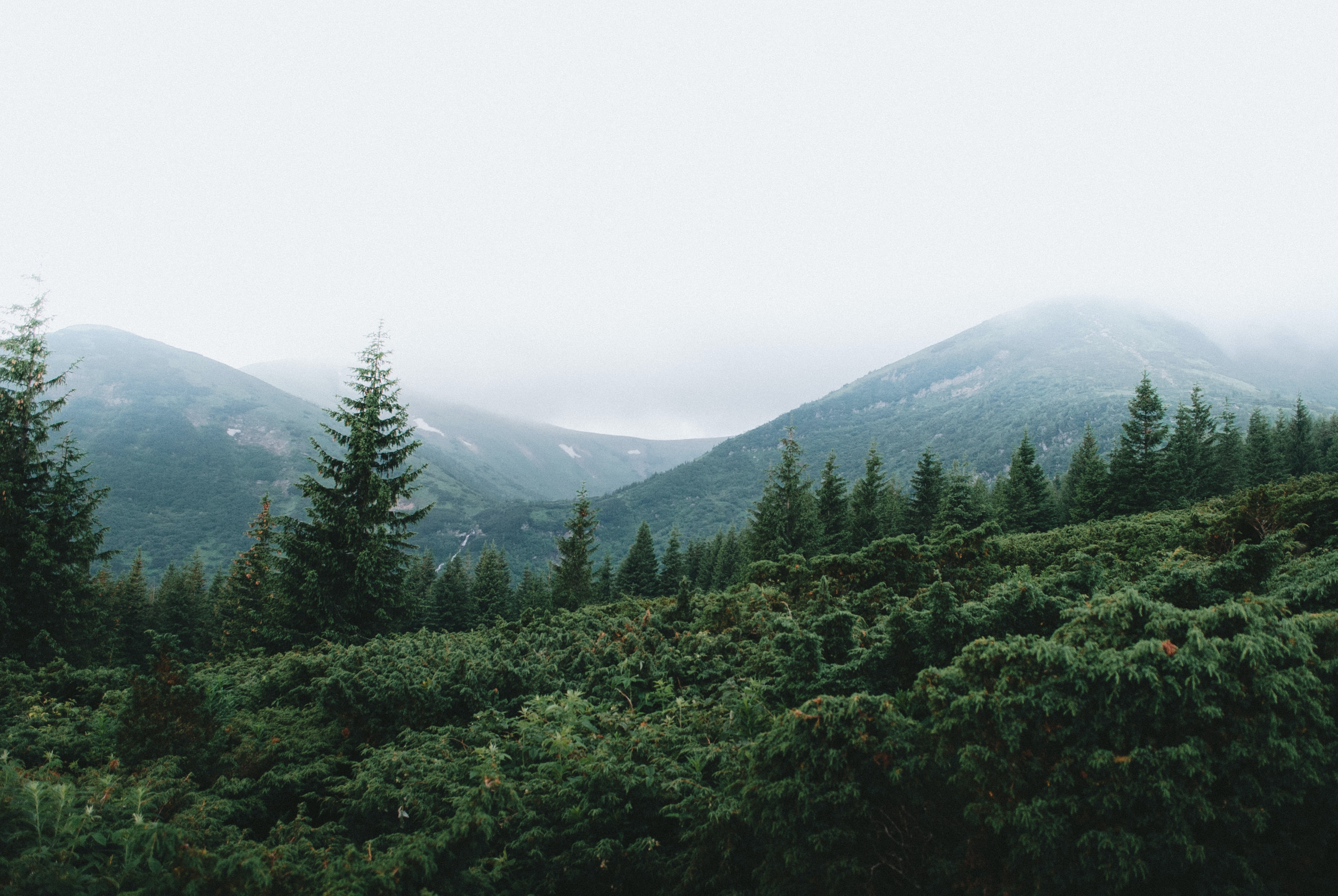 landscape photography of green trees and mountains