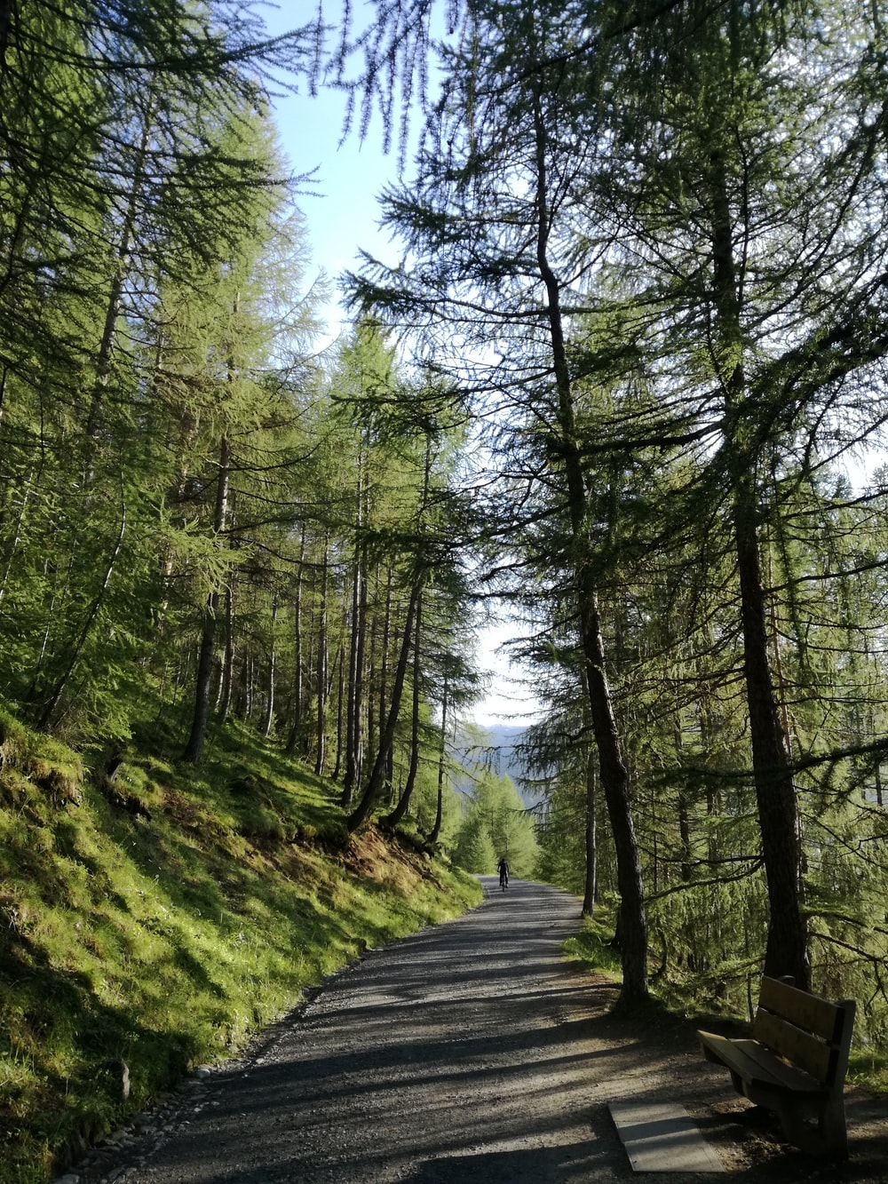 asphalt road surrounded by trees