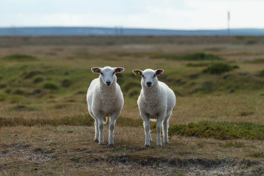 Came across these cute sheeps, that were curios and wanted to know what I were doing.