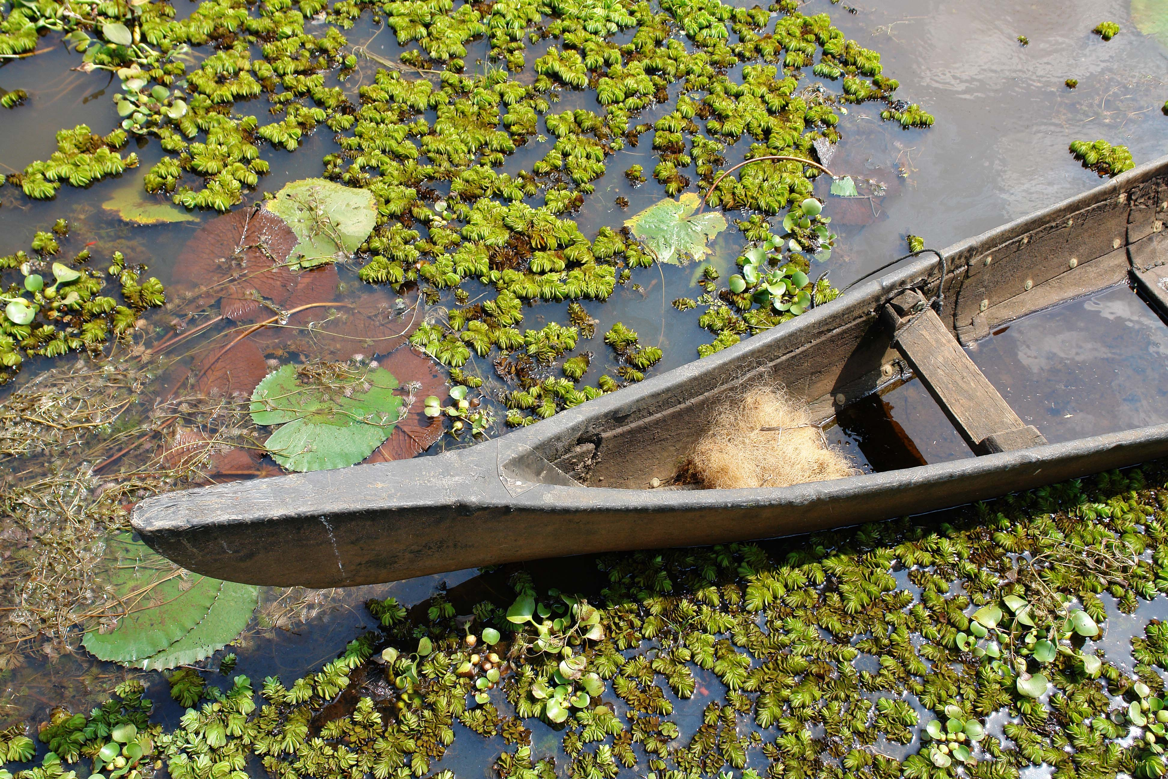 brown canoe on water with waterlilies