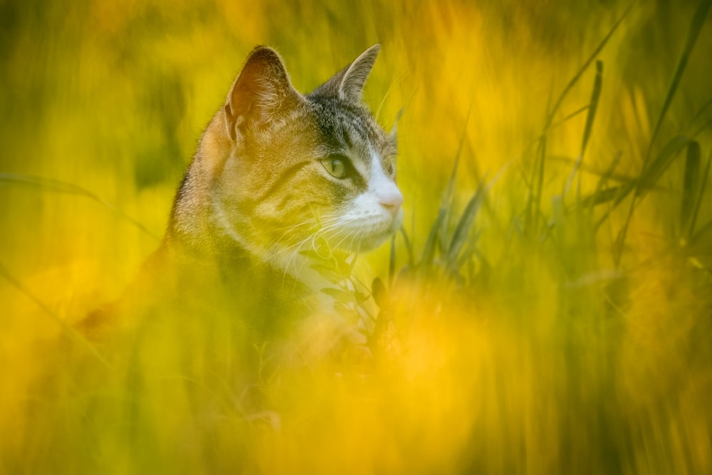 short-fur brown cat covered by grasses
