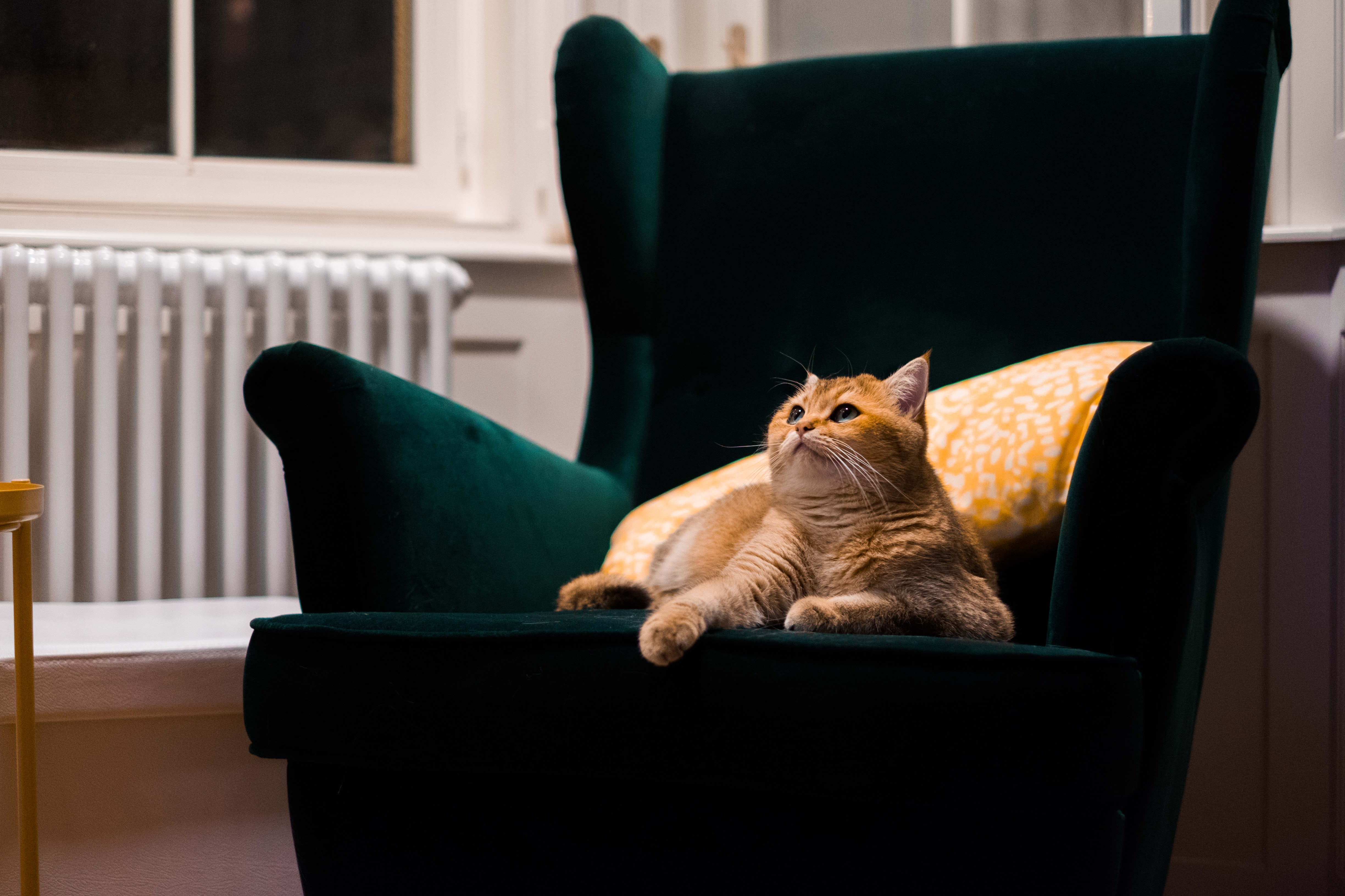 orange tabby cat lying on sofa chair